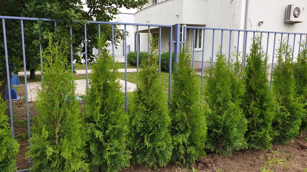 Živa ograda i tepih trava AS Impeks