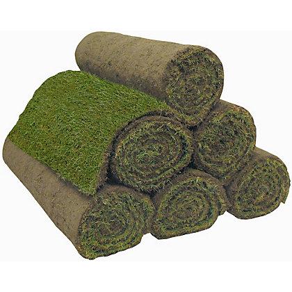 Priprema terena i naručivanje tepih trave